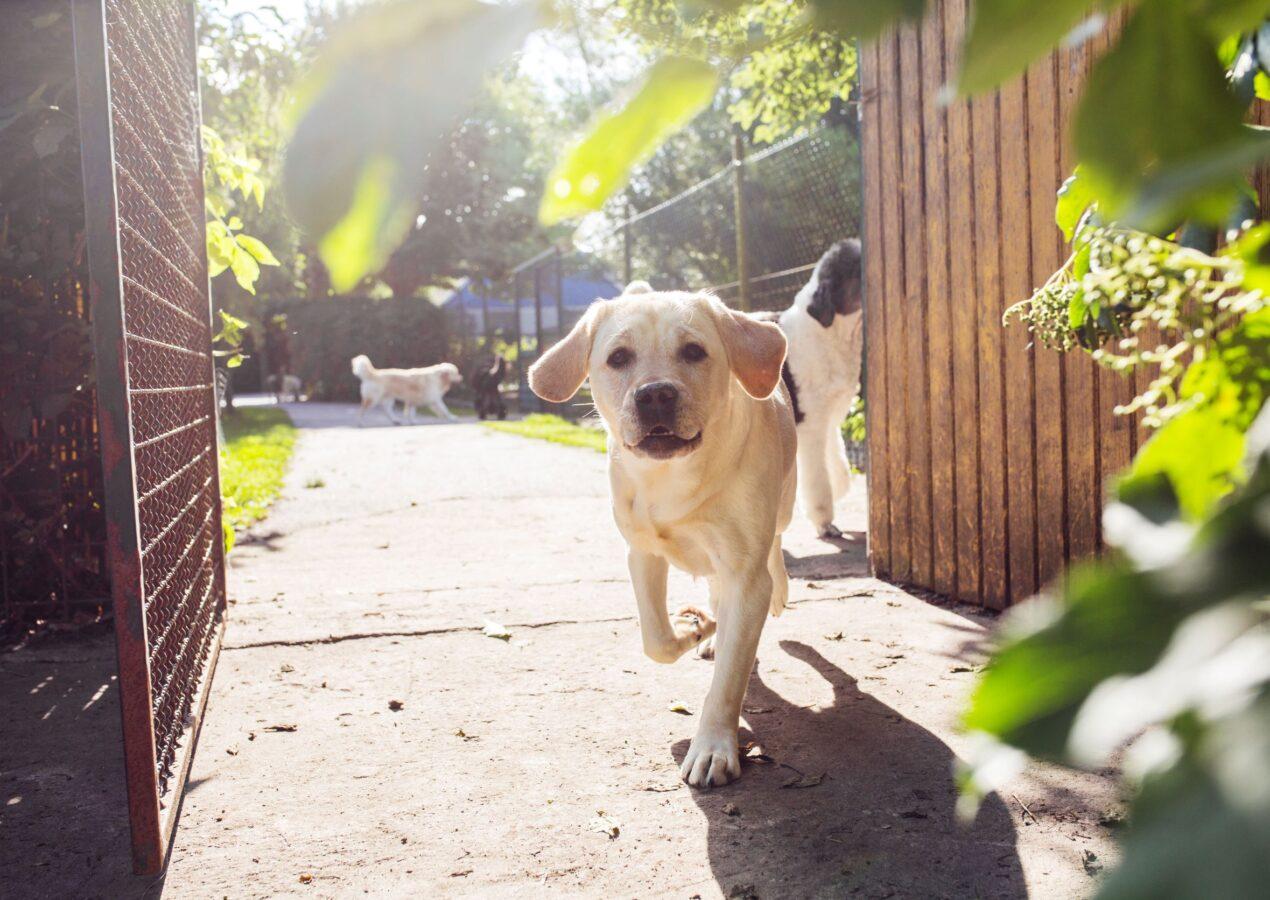 Scopri la vendita medicinali per cani a montesilvano
